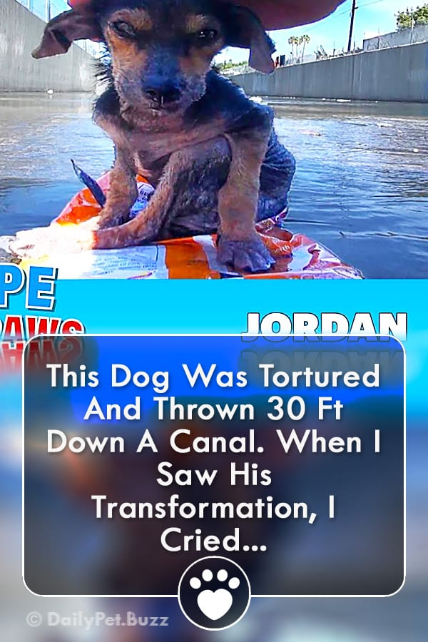 This Dog Was Tortured And Thrown 30 Ft Down A Canal. When I Saw His Transformation, I Cried...