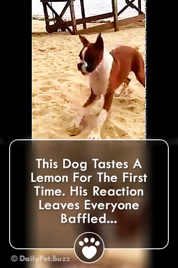 This Dog Tastes A Lemon For The First Time. His Reaction Leaves Everyone Baffled...
