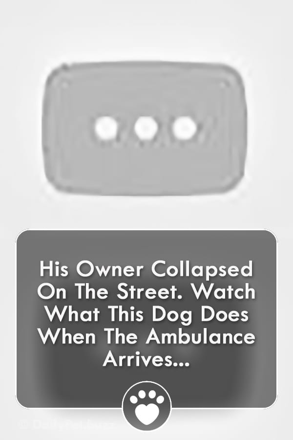 His Owner Collapsed On The Street. Watch What This Dog Does When The Ambulance Arrives...
