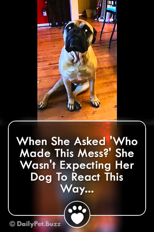 When She Asked \'Who Made This Mess?\' She Wasn\'t Expecting Her Dog To React This Way...