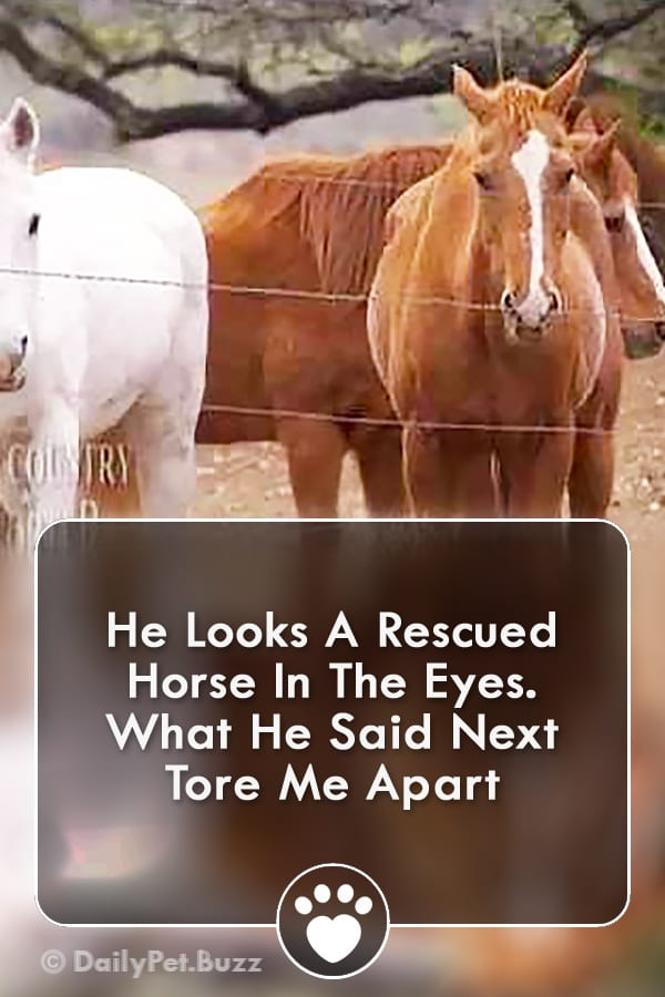 He Looks A Rescued Horse In The Eyes. What He Said Next Tore Me Apart