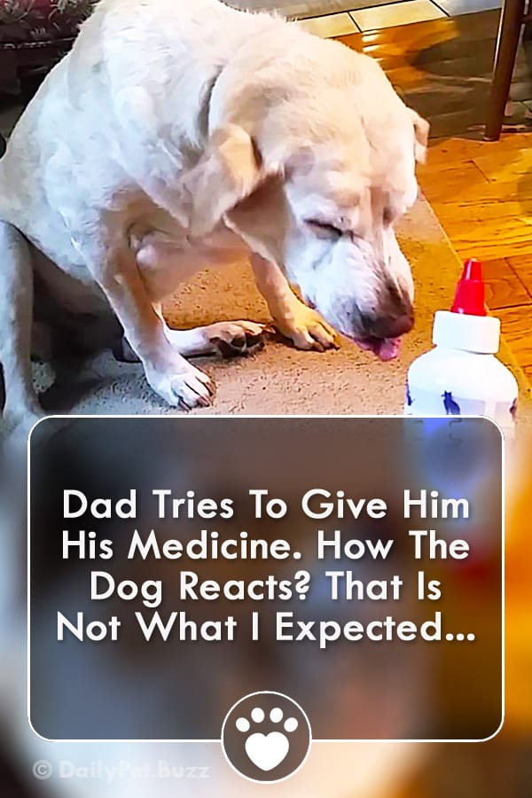 Dad Tries To Give Him His Medicine. How The Dog Reacts? That Is Not What I Expected...