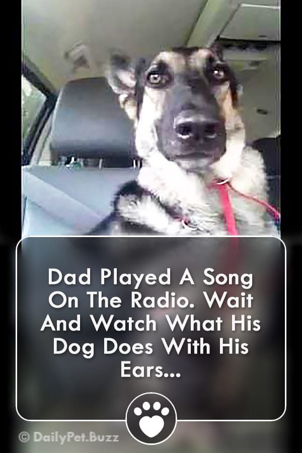 Dad Played A Song On The Radio. Wait And Watch What His Dog Does With His Ears...