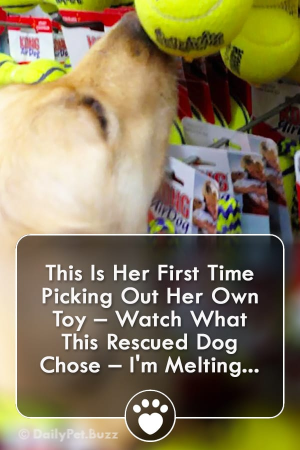 This Is Her First Time Picking Out Her Own Toy – Watch What This Rescued Dog Chose – I\'m Melting...