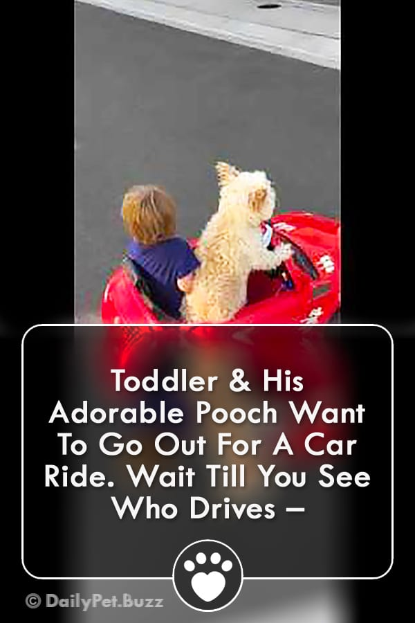 Toddler & His Adorable Pooch Want To Go Out For A Car Ride. Wait Till You See Who Drives –