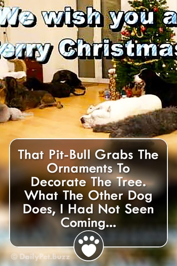 That Pit-Bull Grabs The Ornaments To Decorate The Tree. What The Other Dog Does, I Had Not Seen Coming...