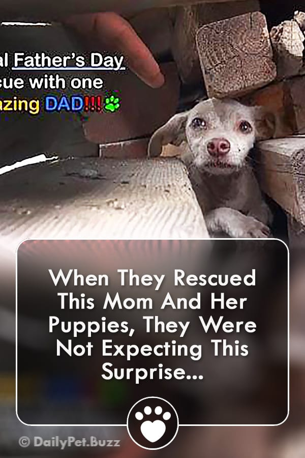 When They Rescued This Mom And Her Puppies, They Were Not Expecting This Surprise...