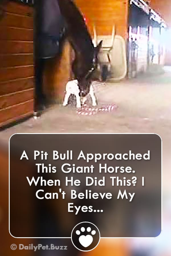 A Pit Bull Approached This Giant Horse. When He Did This? I Can\'t Believe My Eyes...