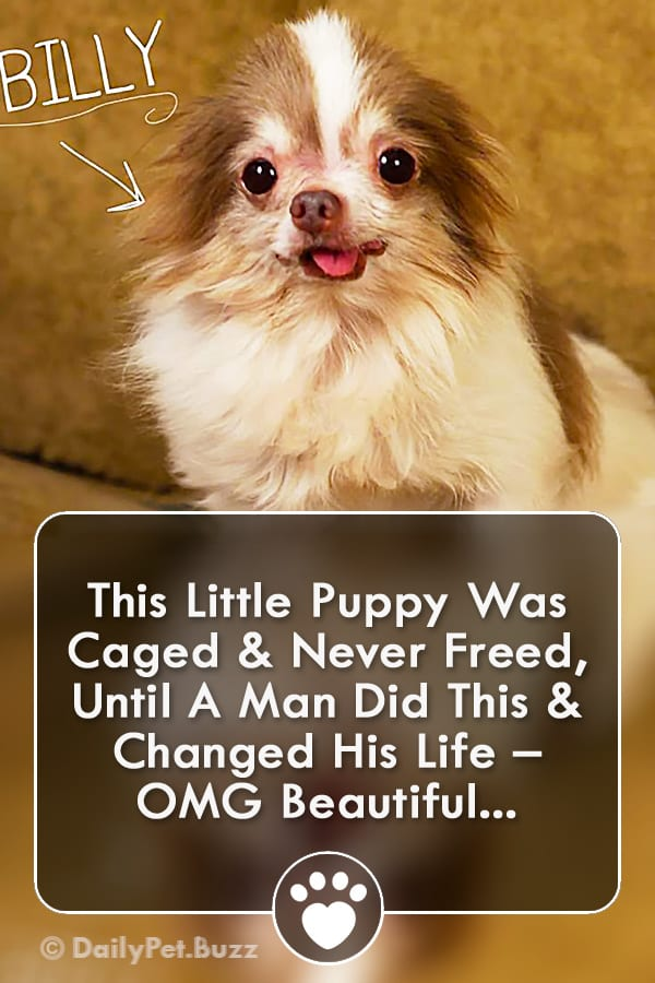 This Little Puppy Was Caged & Never Freed, Until A Man Did This & Changed His Life – OMG Beautiful...