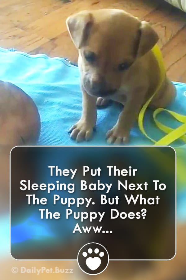 They Put Their Sleeping Baby Next To The Puppy. But What The Puppy Does? Aww...
