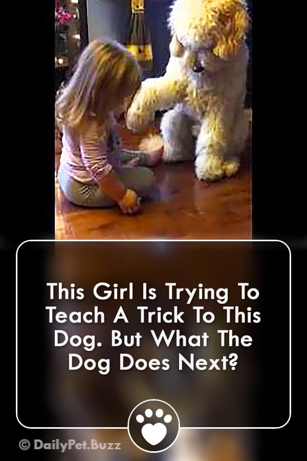 This Girl Is Trying To Teach A Trick To This Dog. But What The Dog Does Next?