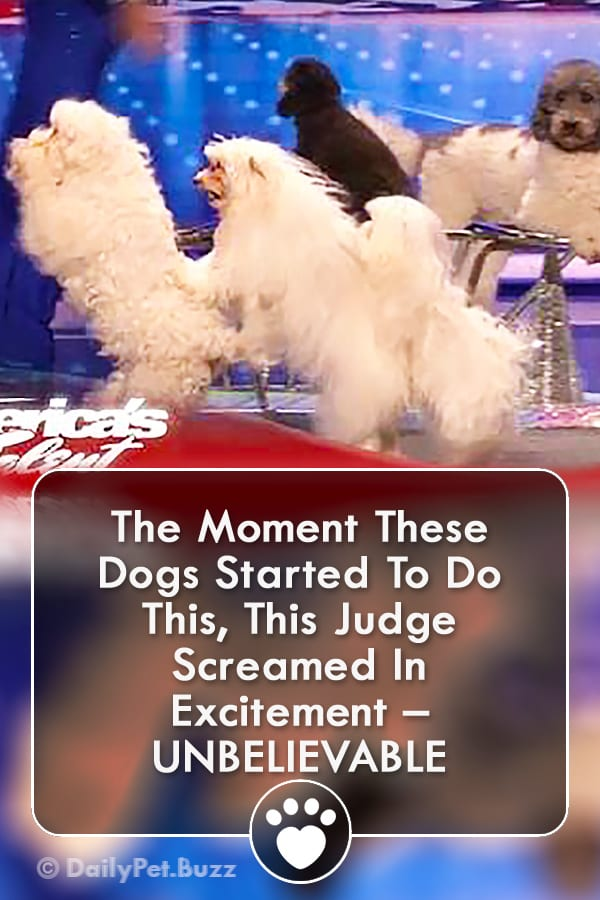 The Moment These Dogs Started To Do This, This Judge Screamed In Excitement – UNBELIEVABLE