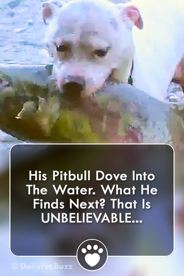 His Pitbull Dove Into The Water. What He Finds Next? That Is UNBELIEVABLE...