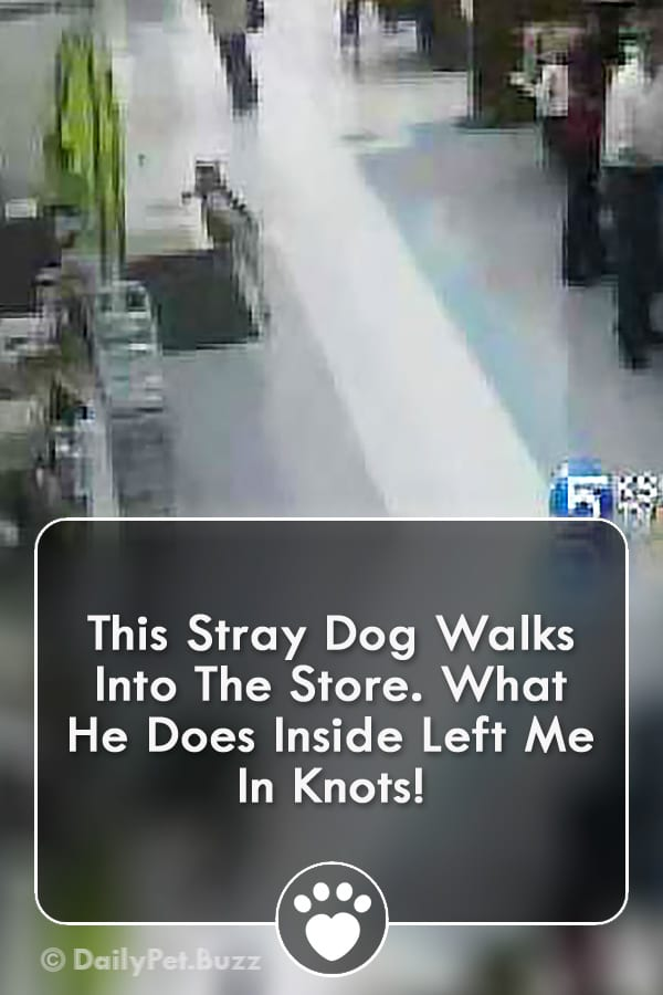 This Stray Dog Walks Into The Store. What He Does Inside Left Me In Knots!