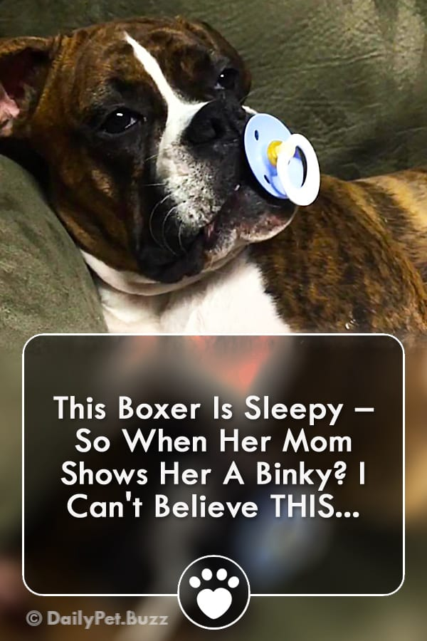 This Boxer Is Sleepy – So When Her Mom Shows Her A Binky? I Can\'t Believe THIS...