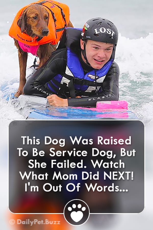 This Dog Was Raised To Be Service Dog, But She Failed. Watch What Mom Did NEXT! I\'m Out Of Words...