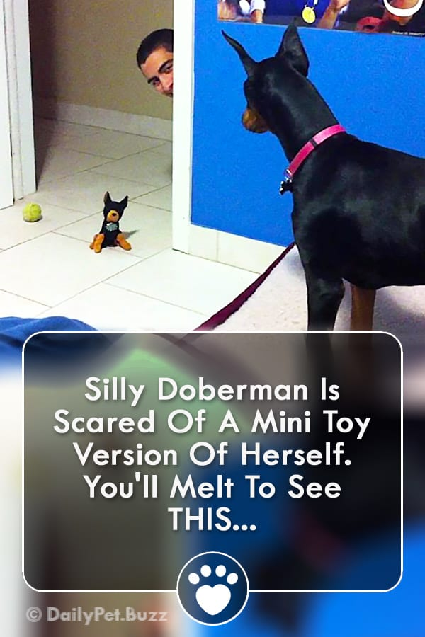 Silly Doberman Is Scared Of A Mini Toy Version Of Herself. You\'ll Melt To See THIS...