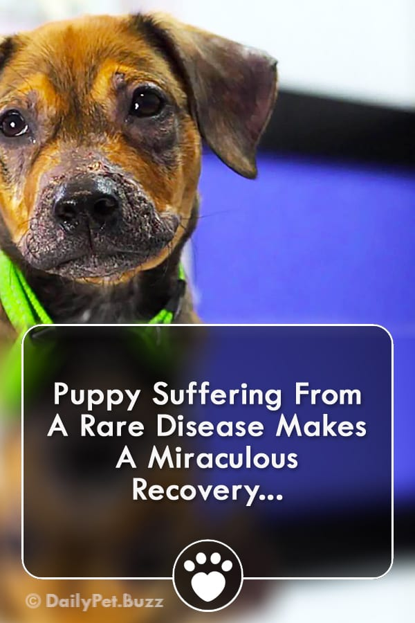 Puppy Suffering From A Rare Disease Makes A Miraculous Recovery...