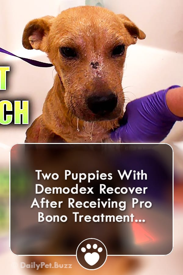 Two Puppies With Demodex Recover After Receiving Pro Bono Treatment...