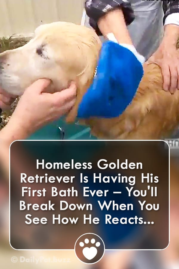 Homeless Golden Retriever Is Having His First Bath Ever – You\'ll Break Down When You See How He Reacts...