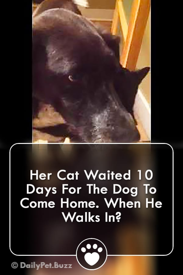 Her Cat Waited 10 Days For The Dog To Come Home. When He Walks In?