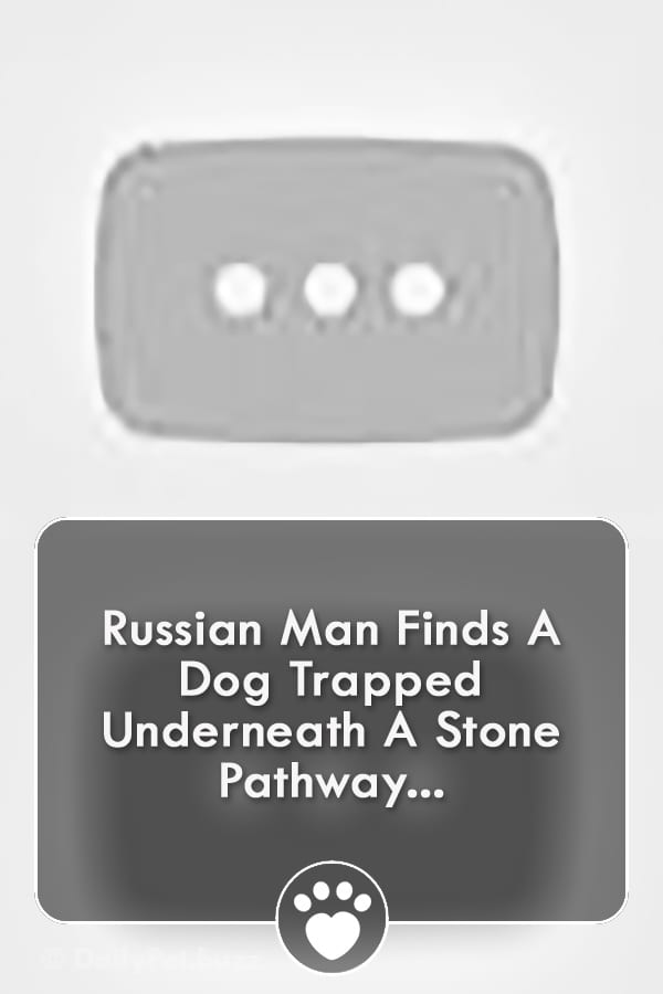 Russian Man Finds A Dog Trapped Underneath A Stone Pathway...