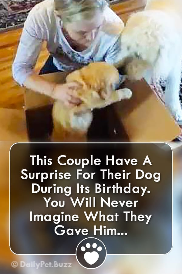This Couple Have A Surprise For Their Dog During Its Birthday. You Will Never Imagine What They Gave Him...