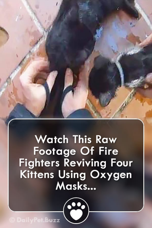 Watch This Raw Footage Of Fire Fighters Reviving Four Kittens Using Oxygen Masks...