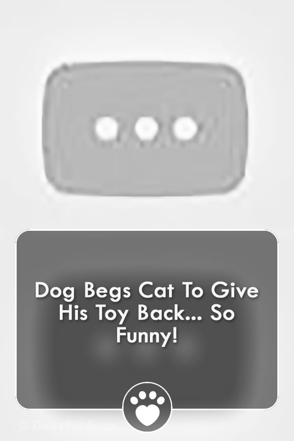 Dog Begs Cat To Give His Toy Back... So Funny!