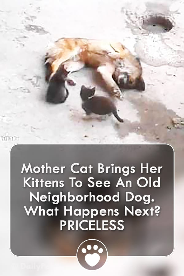Mother Cat Brings Her Kittens To See An Old Neighborhood Dog. What Happens Next? PRICELESS