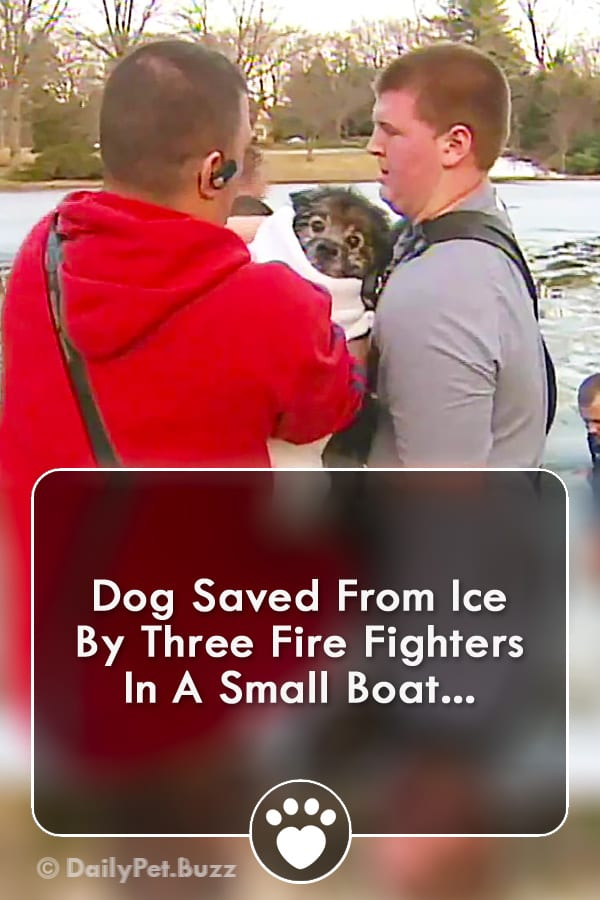 Dog Saved From Ice By Three Fire Fighters In A Small Boat...