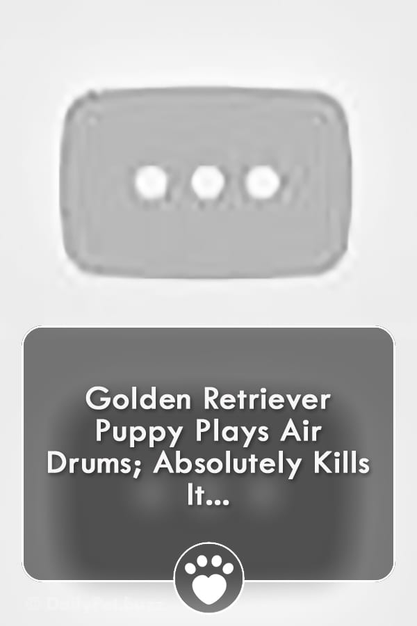 Golden Retriever Puppy Plays Air Drums; Absolutely Kills It...