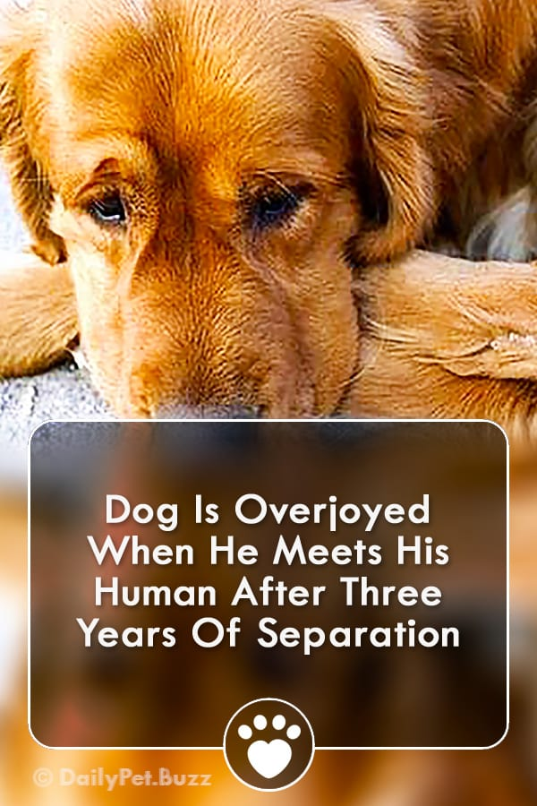 Dog Is Overjoyed When He Meets His Human After Three Years Of Separation