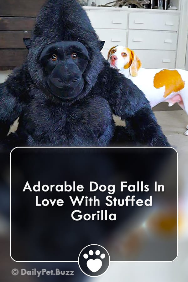 Adorable Dog Falls In Love With Stuffed Gorilla