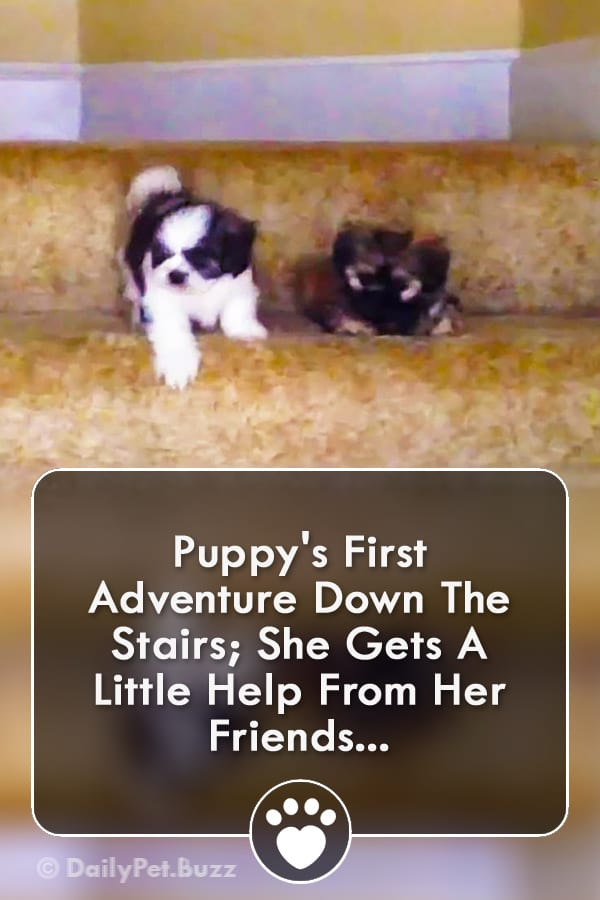 Puppy\'s First Adventure Down The Stairs; She Gets A Little Help From Her Friends...