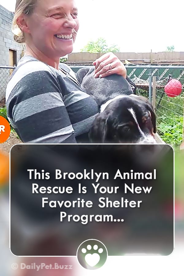 This Brooklyn Animal Rescue Is Your New Favorite Shelter Program...