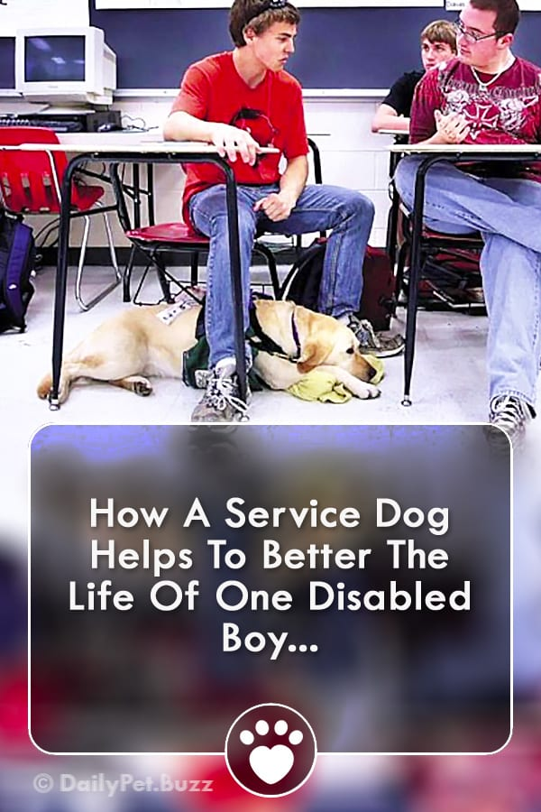 How A Service Dog Helps To Better The Life Of One Disabled Boy...