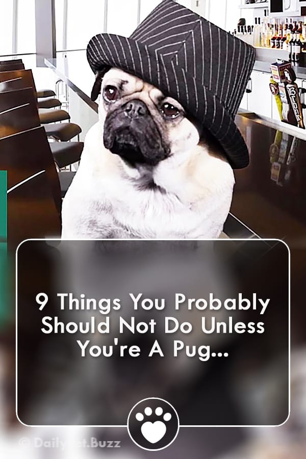 9 Things You Probably Should Not Do Unless You\'re A Pug...