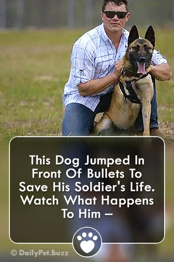 This Dog Jumped In Front Of Bullets To Save His Soldier\'s Life. Watch What Happens To Him –