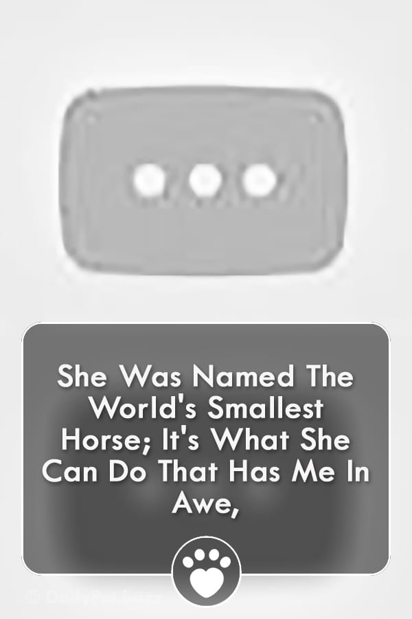 She Was Named The World\'s Smallest Horse; It\'s What She Can Do That Has Me In Awe,