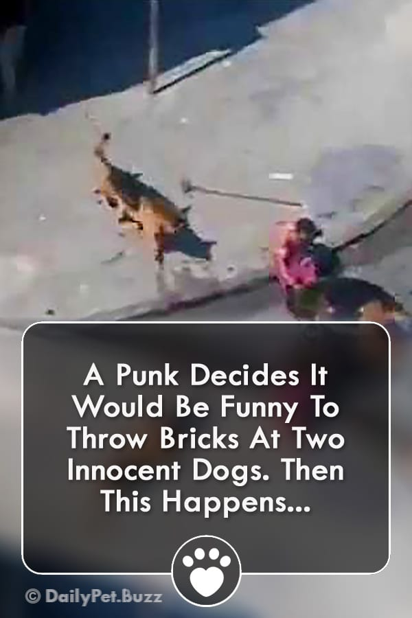 A Punk Decides It Would Be Funny To Throw Bricks At Two Innocent Dogs. Then THIS Happens...