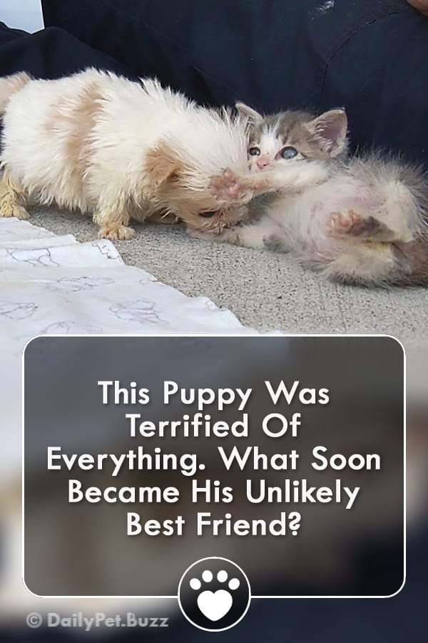 This Puppy Was Terrified Of Everything. What Soon Became His Unlikely Best Friend?