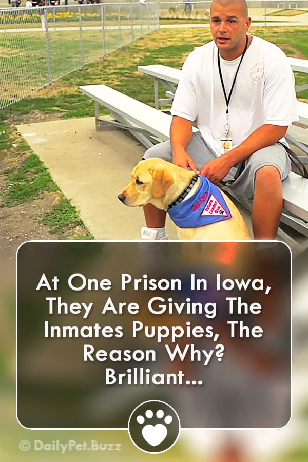 At One Prison In Iowa, They Are Giving The Inmates Puppies, The Reason Why? BRILLIANT!