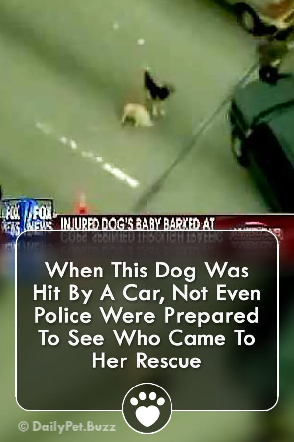 When This Dog Was Hit By A Car, Not Even Police Were Prepared To See Who Came To Her Rescue