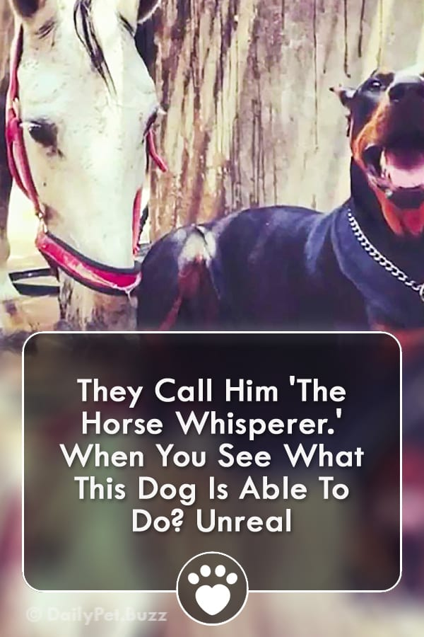 They Call Him \'The Horse Whisperer.\' When You See What This Dog Is Able To Do? Unreal