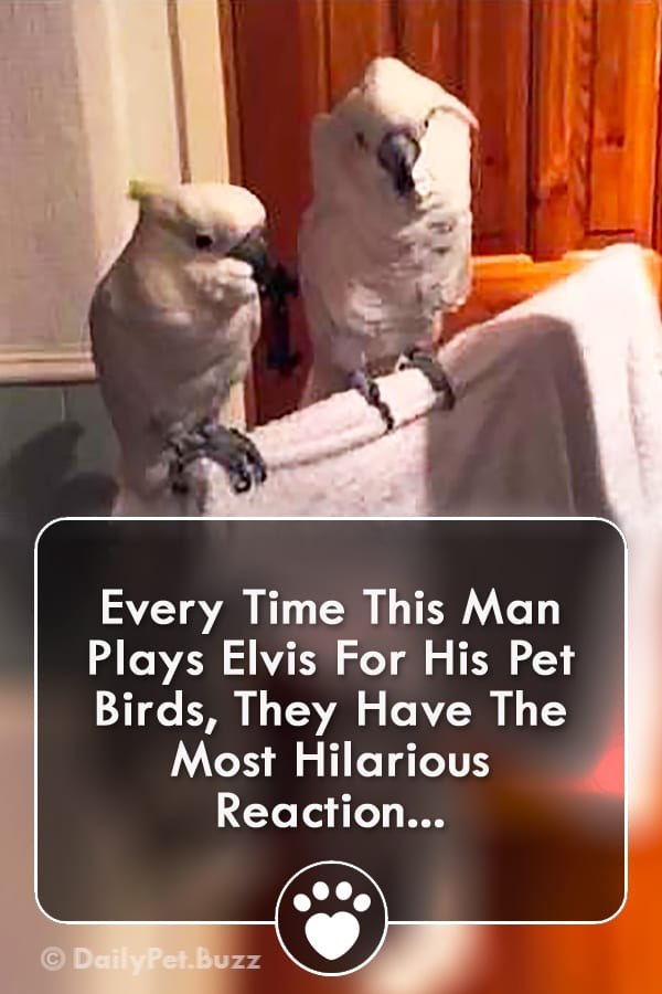 Every Time This Man Plays Elvis For His Pet Birds, They Have The Most Hilarious Reaction...