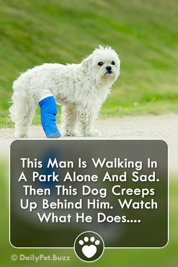 This Man Is Walking In A Park Alone And Sad. Then This Dog Creeps Up Behind Him. Watch What He Does....