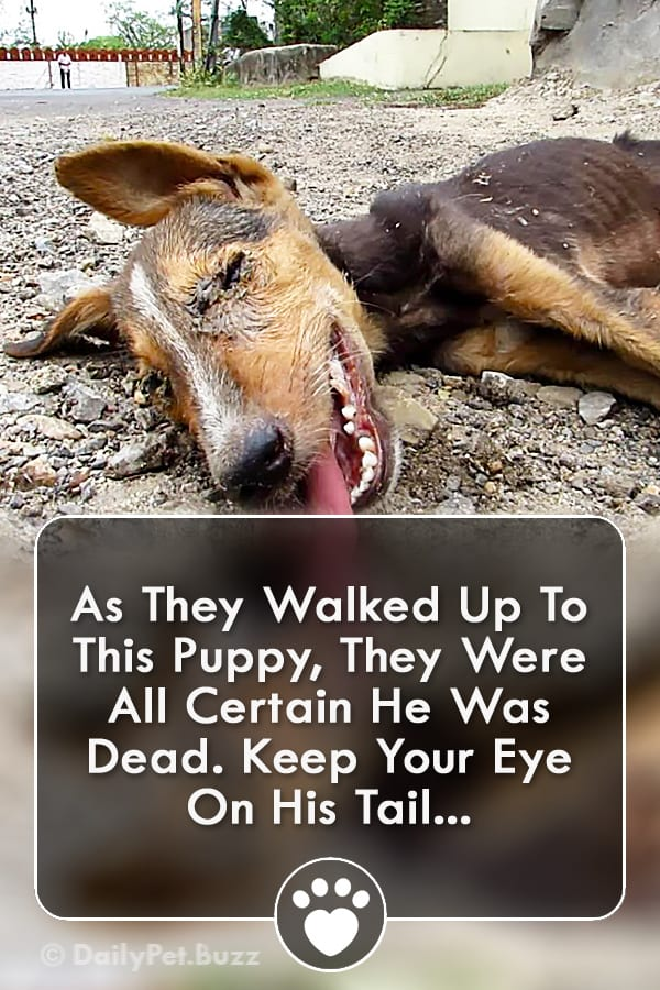 As They Walked Up To This Puppy, They Were All Certain He Was Dead. Keep Your Eye On His Tail...