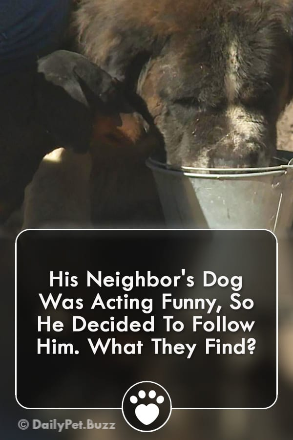 His Neighbor\'s Dog Was Acting Funny, So He Decided To Follow Him. What They Find?