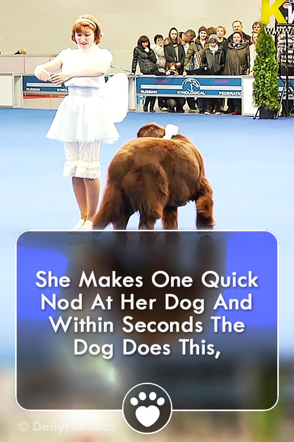 She Makes One Quick Nod At Her Dog And Within Seconds The Dog Does This,